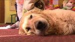 Dogoterapia – leczniczy wpływ psa na człowieka